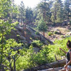 Wild Elk along the hiking trails