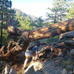 Many downed trees on the hiking trail