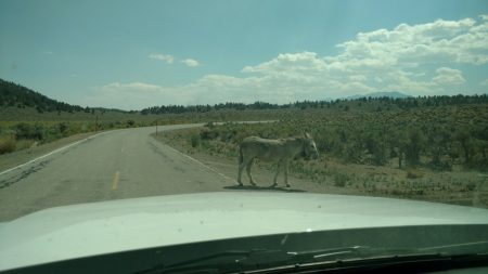 """""""Get outta the road, jackass!"""""""