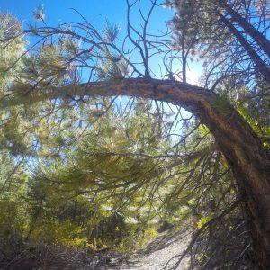 Not lens distortion. Tree was distorted.