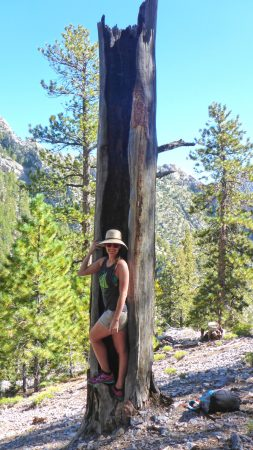 Trail Canyon Mt Charleston