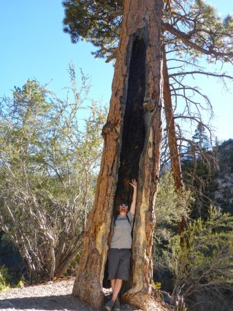 Trail Canyon Mt Charleston