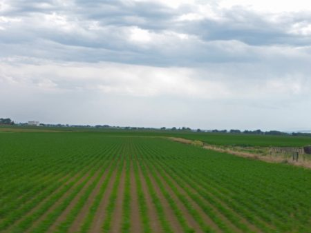some farm land