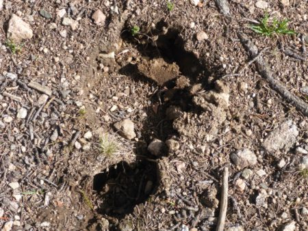 Bigfoot was apparently here!
