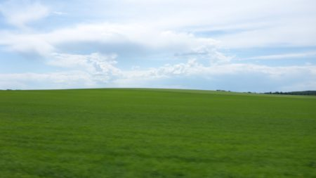 That's the greenest field I have ever seen!
