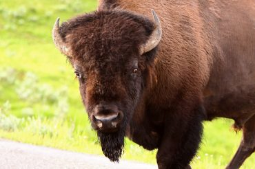 How To Visit Yellowstone Like a Pro: 8 Tips